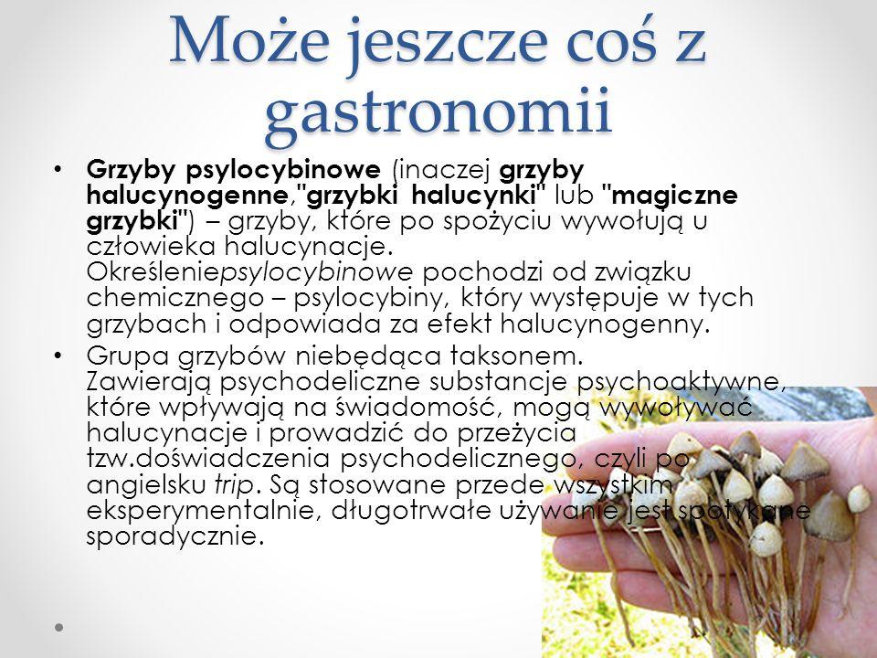 Może jeszcze coś z gastronomii Grzyby psylocybinowe (inaczej grzyby halucynogenne,