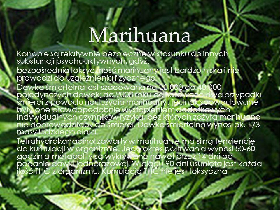 Marihuana Konopie są relatywnie bezpieczne w stosunku do innych substancji psychoaktywnych, gdyż: bezpośrednia toksyczność marihuany jest bardzo niska