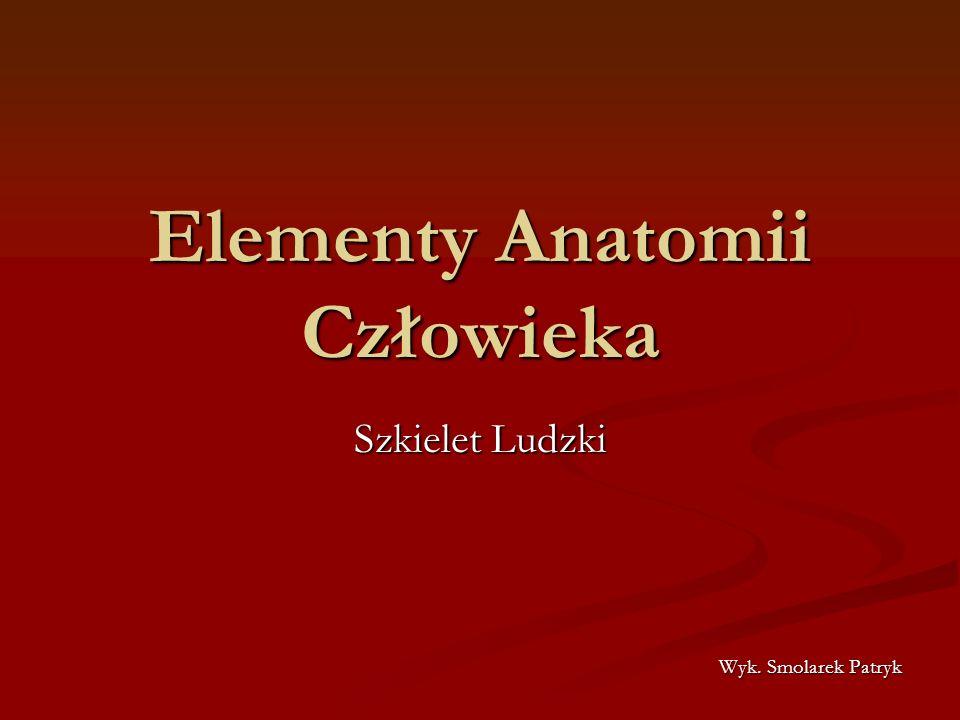 Elementy Anatomii Człowieka Szkielet Ludzki Wyk. Smolarek Patryk