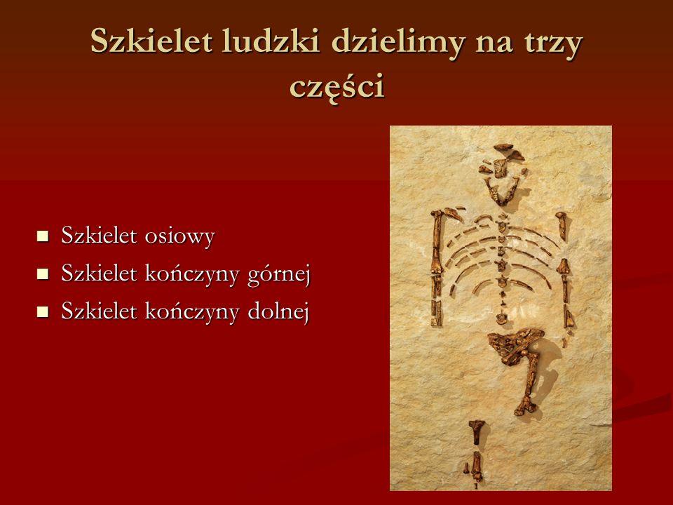 Szkielet ludzki dzielimy na trzy części Szkielet osiowy Szkielet osiowy Szkielet kończyny górnej Szkielet kończyny górnej Szkielet kończyny dolnej Szkielet kończyny dolnej