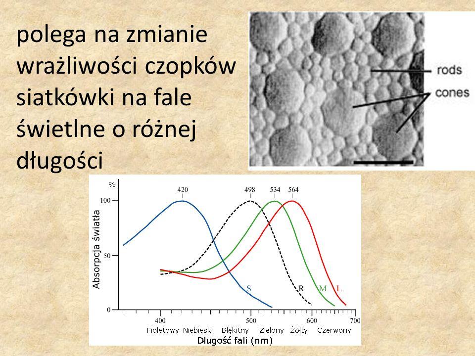 polega na zmianie wrażliwości czopków siatkówki na fale świetlne o różnej długości