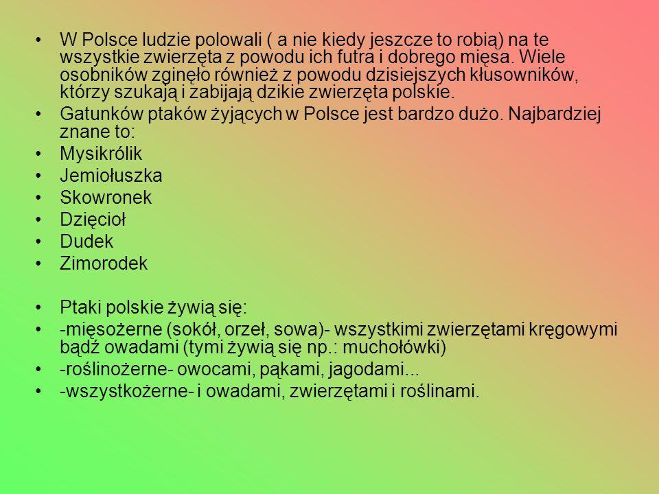 W Polsce ludzie polowali ( a nie kiedy jeszcze to robią) na te wszystkie zwierzęta z powodu ich futra i dobrego mięsa.