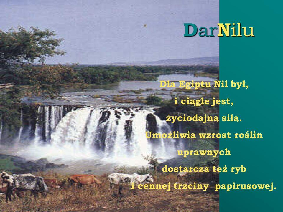 D ar N ilu Dla Egiptu Nil był, i ciągle jest, życiodajną siłą. Umożliwia wzrost roślin uprawnych dostarcza też ryb i cennej trzciny papirusowej.