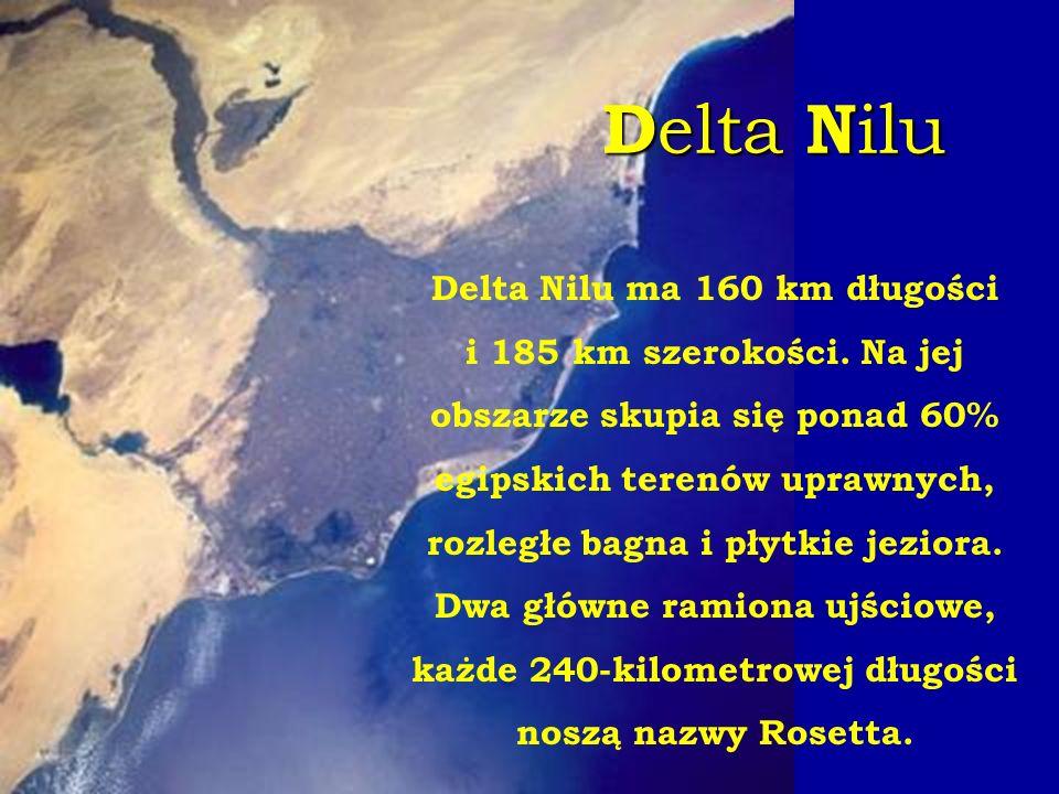 D elta N ilu Delta Nilu ma 160 km długości i 185 km szerokości. Na jej obszarze skupia się ponad 60% egipskich terenów uprawnych, rozległe bagna i pły