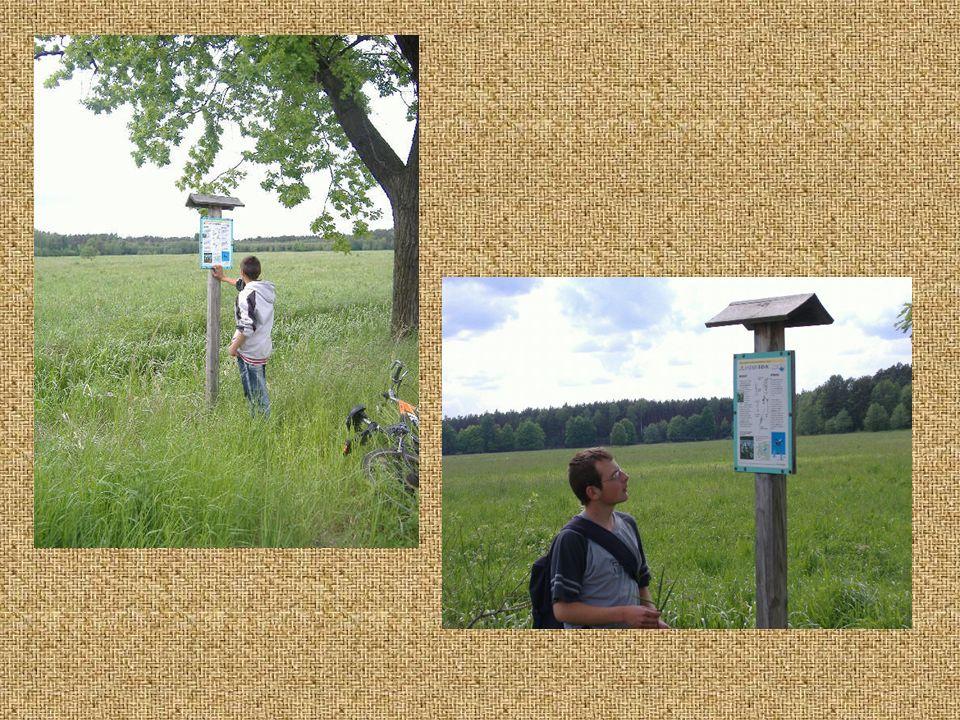 Podczas wycieczek po Stobrawskim Parku Krajobrazowym młodzi ekolodzy nie zapominają o uprzątnięciu śmieci oraz sprawdzeniu stanu technicznego tablic informacyjnych.