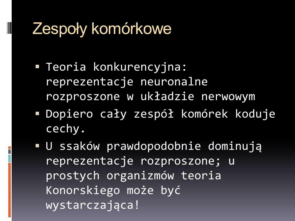 Zespoły komórkowe Teoria konkurencyjna: reprezentacje neuronalne rozproszone w układzie nerwowym Dopiero cały zespół komórek koduje cechy. U ssaków pr