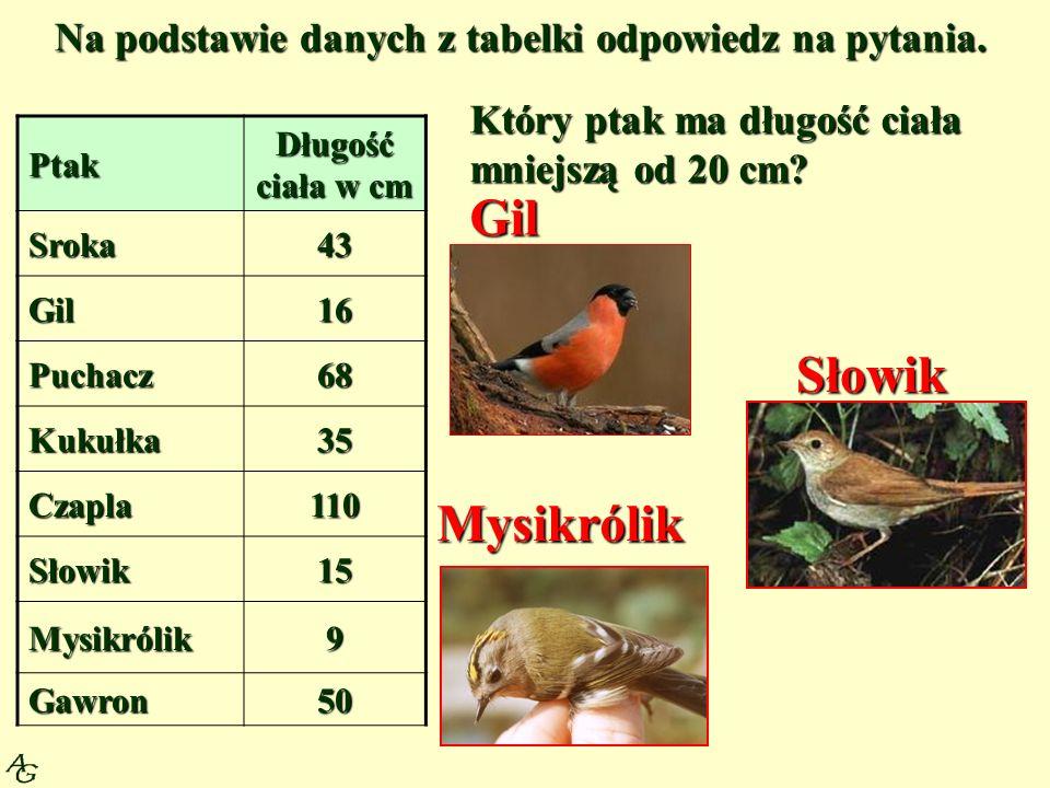 Na podstawie danych z tabelki odpowiedz na pytania. Ptak Długość ciała w cm Sroka43 Gil16 Puchacz68 Kukułka35 Czapla110 Słowik15 Mysikrólik9 Gawron50