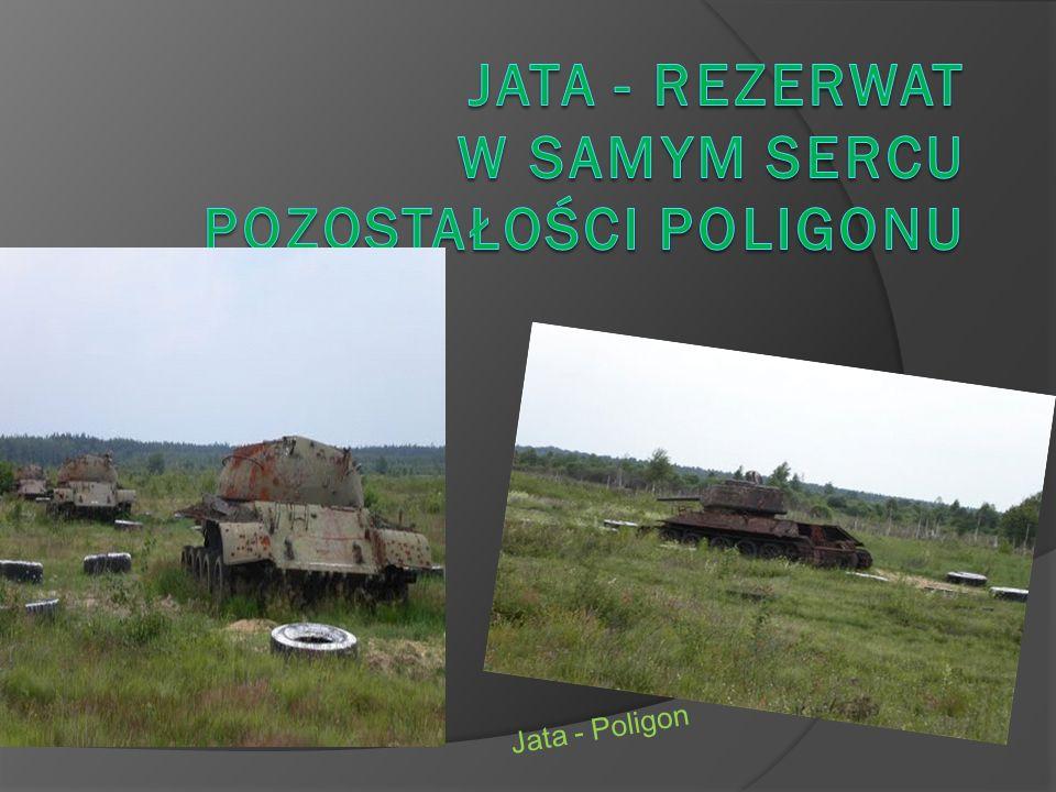 Jata - Poligon