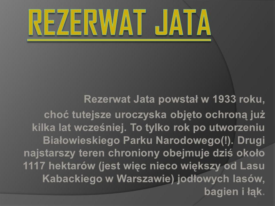 Rezerwat Jata powstał w 1933 roku, choć tutejsze uroczyska objęto ochroną już kilka lat wcześniej. To tylko rok po utworzeniu Białowieskiego Parku Nar