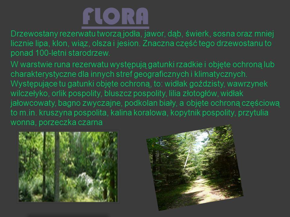 FLORA Drzewostany rezerwatu tworzą jodła, jawor, dąb, świerk, sosna oraz mniej licznie lipa, klon, wiąz, olsza i jesion. Znaczna część tego drzewostan