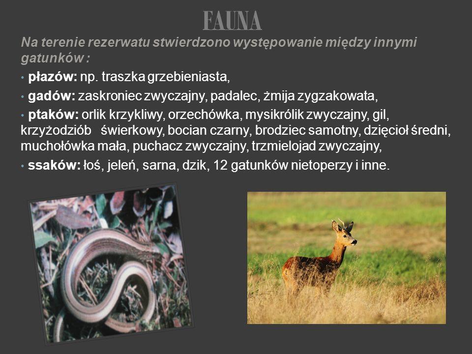 Na terenie rezerwatu stwierdzono występowanie między innymi gatunków : płazów: np. traszka grzebieniasta, gadów: zaskroniec zwyczajny, padalec, żmija