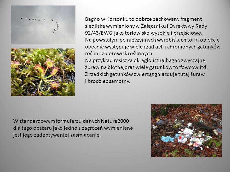 Bagno w Korzonku to dobrze zachowany fragment siedliska wymieniony w Załączniku I Dyrektywy Rady 92/43/EWG jako torfowisko wysokie i przejściowe.