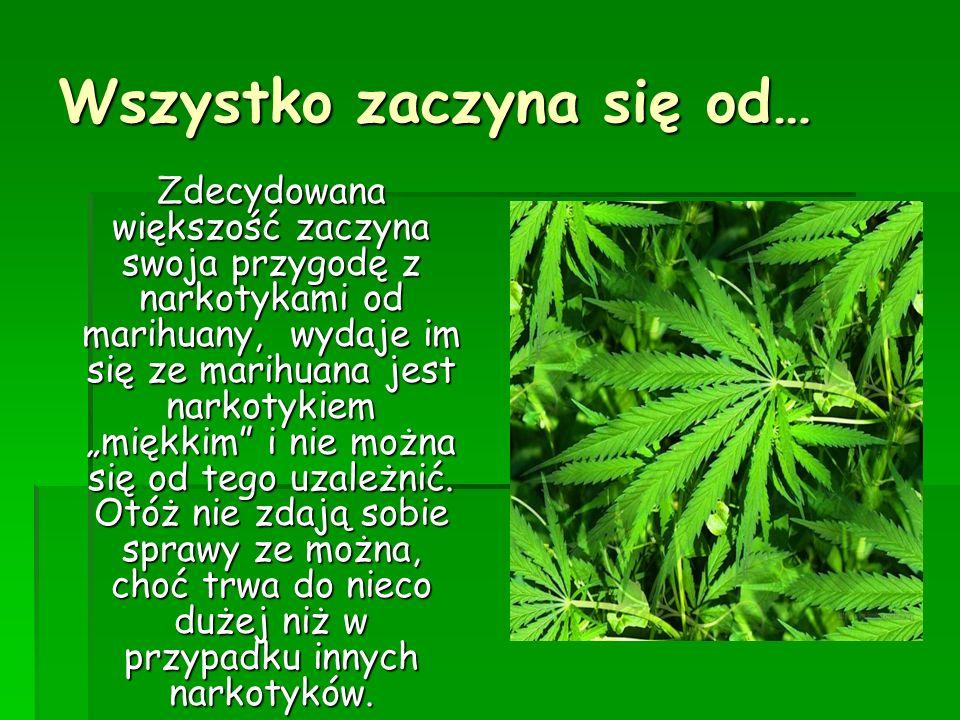 Wszystko zaczyna się od… Zdecydowana większość zaczyna swoja przygodę z narkotykami od marihuany, wydaje im się ze marihuana jest narkotykiem miękkim