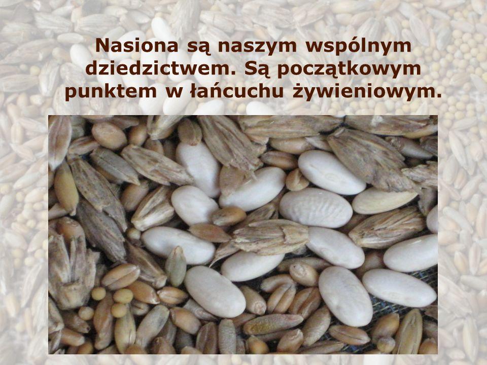 Nasiona są naszym wspólnym dziedzictwem. Są początkowym punktem w łańcuchu żywieniowym.