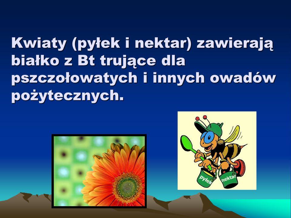 Kwiaty (pyłek i nektar) zawierają białko z Bt trujące dla pszczołowatych i innych owadów pożytecznych.