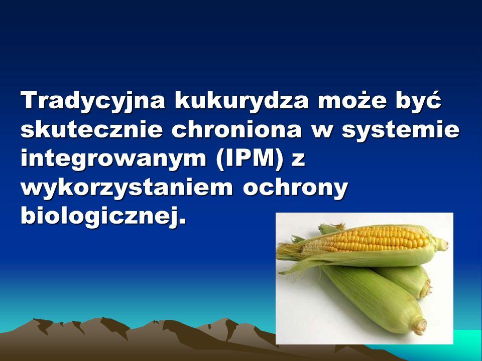 Tradycyjna kukurydza może być skutecznie chroniona w systemie integrowanym (IPM) z wykorzystaniem ochrony biologicznej.