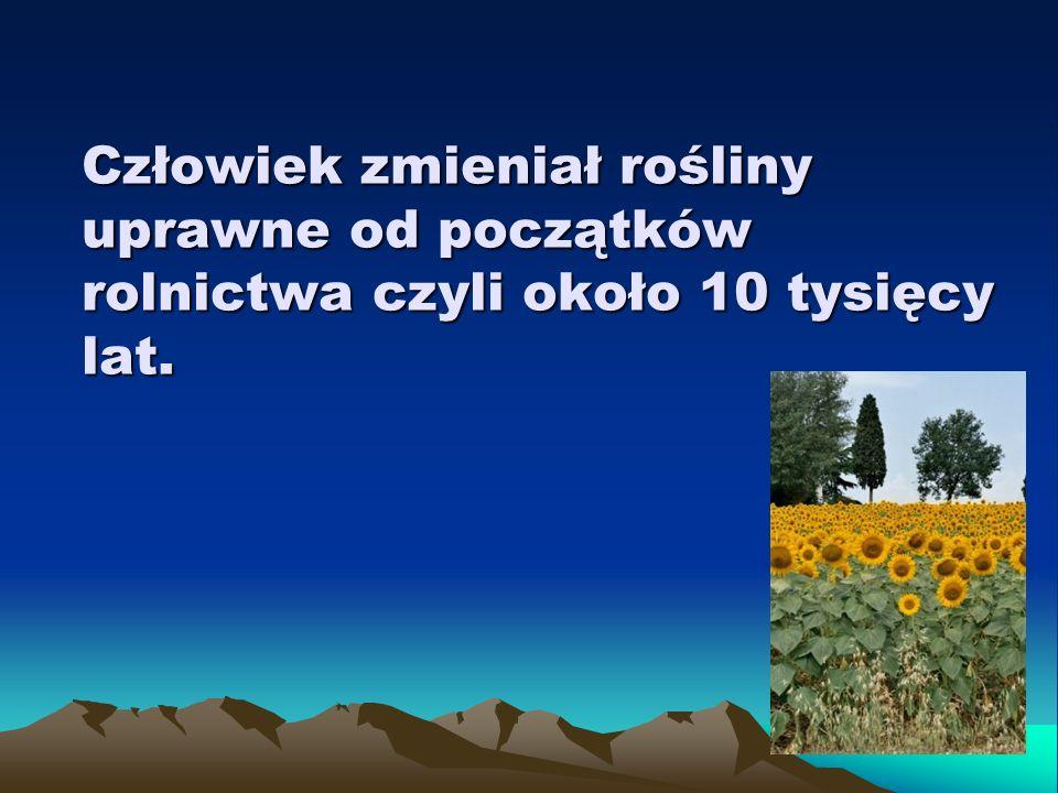 Przez tysiąclecia trwała nieświadoma selekcja roślin, z których wykształciły się różne gatunki roślin uprawnych.