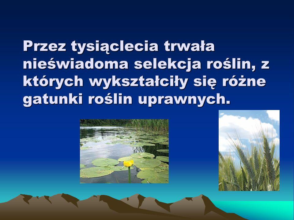 Wobec braku rozeznania długofalowych ubocznych skutków GMO (ekologicznych, zdrowotnych, społeczno- ekonomicznych) domagamy się opóźnienia wprowadzenia GMO do uprawy w Polsce oraz zakazu importu pasz i nasion roślin transgenicznych.