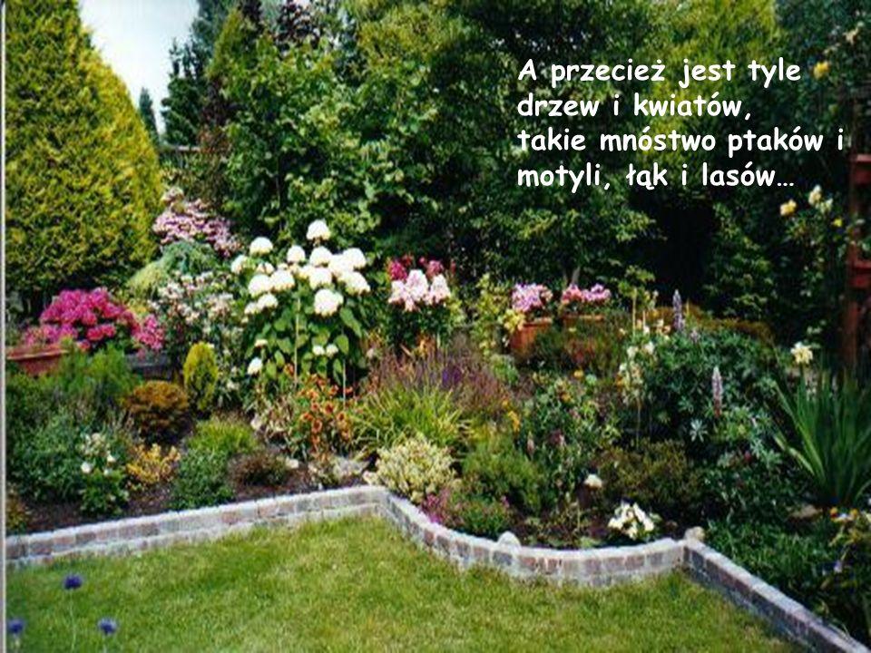A przecież jest tyle drzew i kwiatów, takie mnóstwo ptaków i motyli, łąk i lasów…
