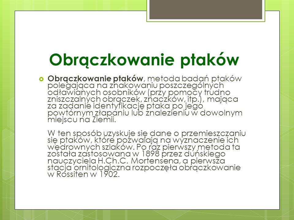 Obrączkowanie ptaków w Polsce W Polsce obrączkowanie ptaków praktykowane jest od 1931.