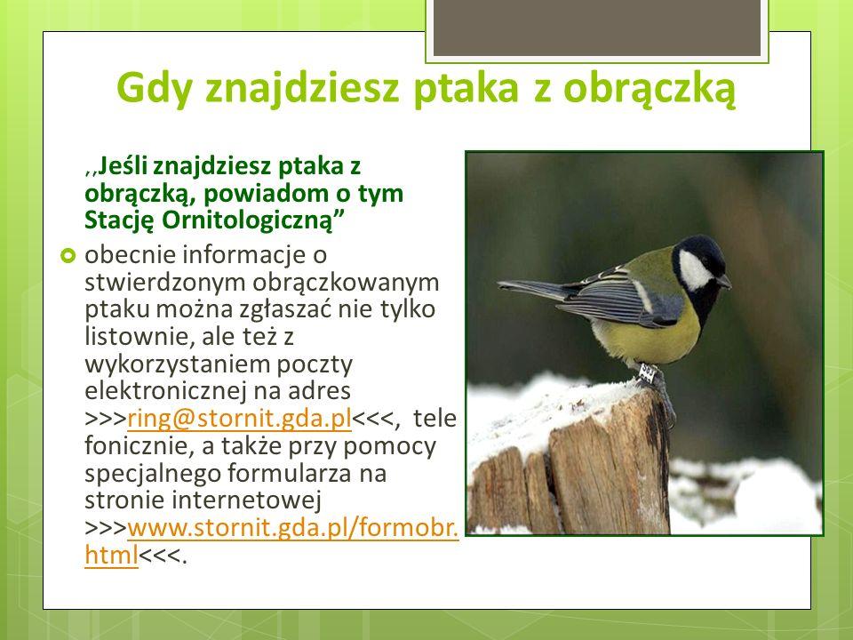 Gdy znajdziesz ptaka z obrączką,, Jeśli znajdziesz ptaka z obrączką, powiadom o tym Stację Ornitologiczną obecnie informacje o stwierdzonym obrączkowanym ptaku można zgłaszać nie tylko listownie, ale też z wykorzystaniem poczty elektronicznej na adres >>>ring@stornit.gda.pl >>www.stornit.gda.pl/formobr.