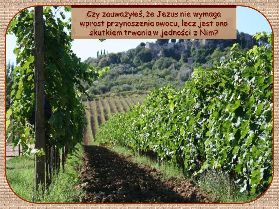 Ja jestem krzewem winnym, wy – latoroślami. Kto trwa we Mnie, a Ja w nim, ten przynosi owoc obfity, ponieważ beze Mnie nic nie możecie uczynić.