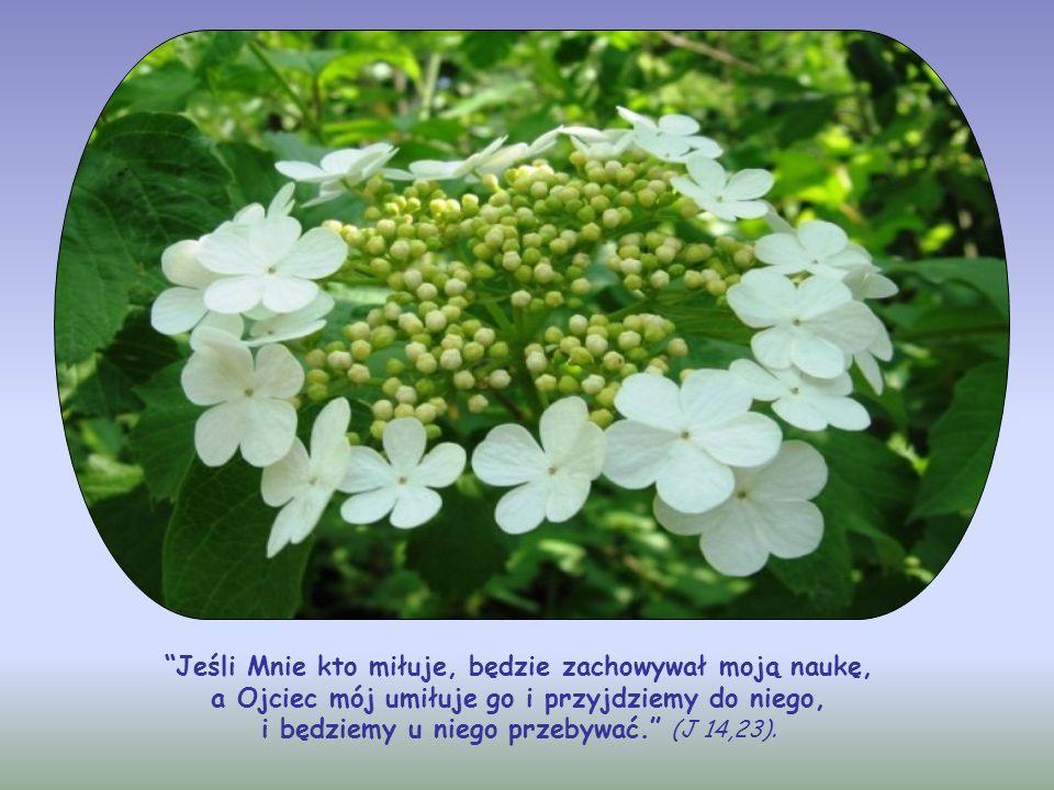 Świątynię, w której On przebywa, tworzą nie tyle mury, co serce chrześcijanina, które dzięki temu staje się nowym tabernakulum, żywym przybytkiem Trój