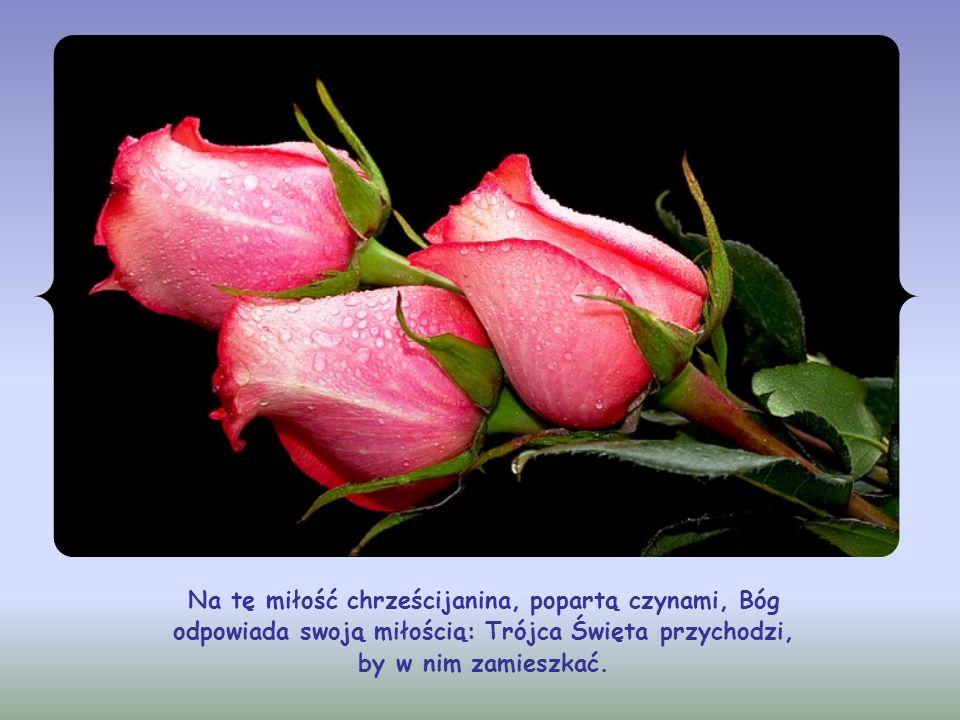 Dzięki miłości do Jezusa. Dzięki miłości, która nie jest jakimś sentymentalizmem, lecz przekłada się na konkretne życie, a mówiąc dokładnie – polega n