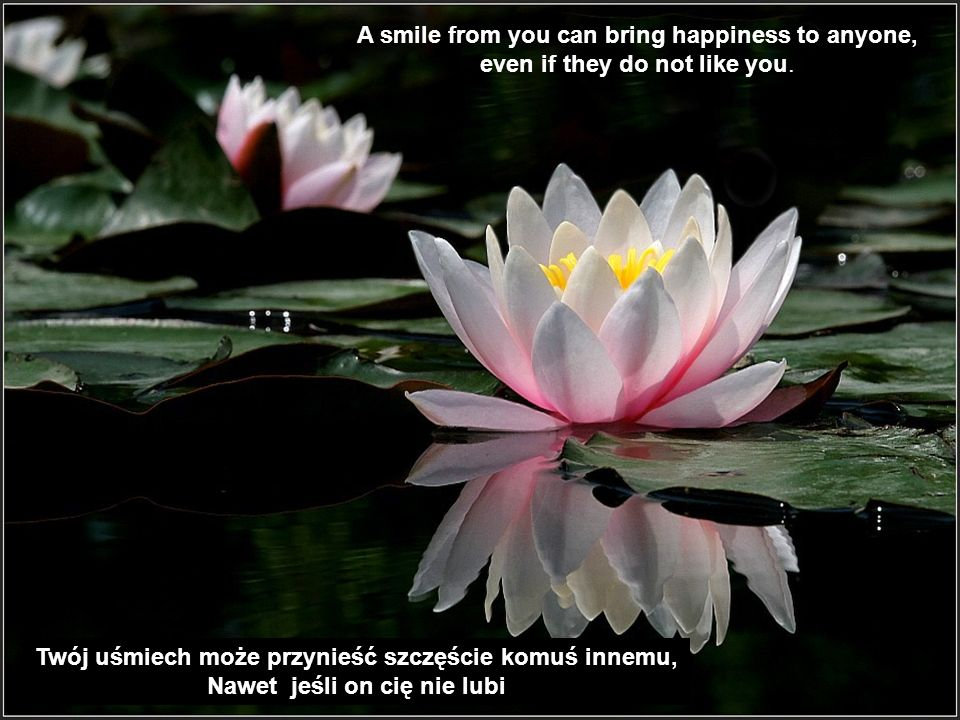 A smile from you can bring happiness to anyone, even if they do not like you.