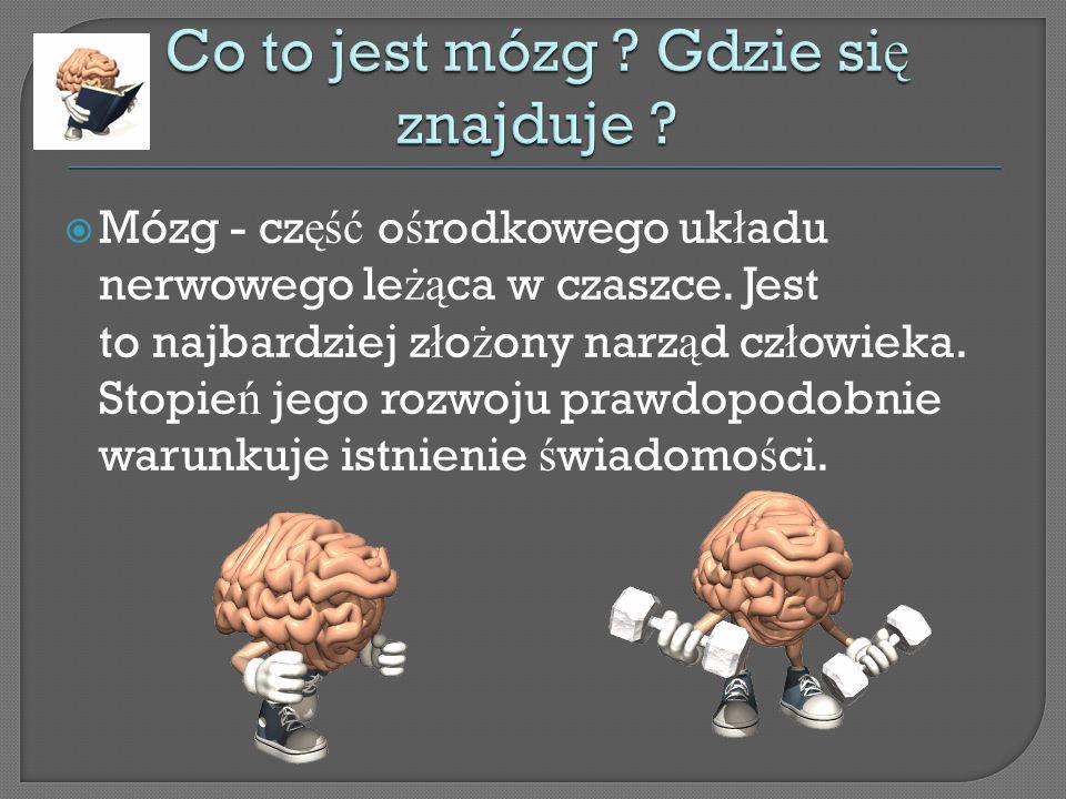 Mózg - cz ęść o ś rodkowego uk ł adu nerwowego le żą ca w czaszce.