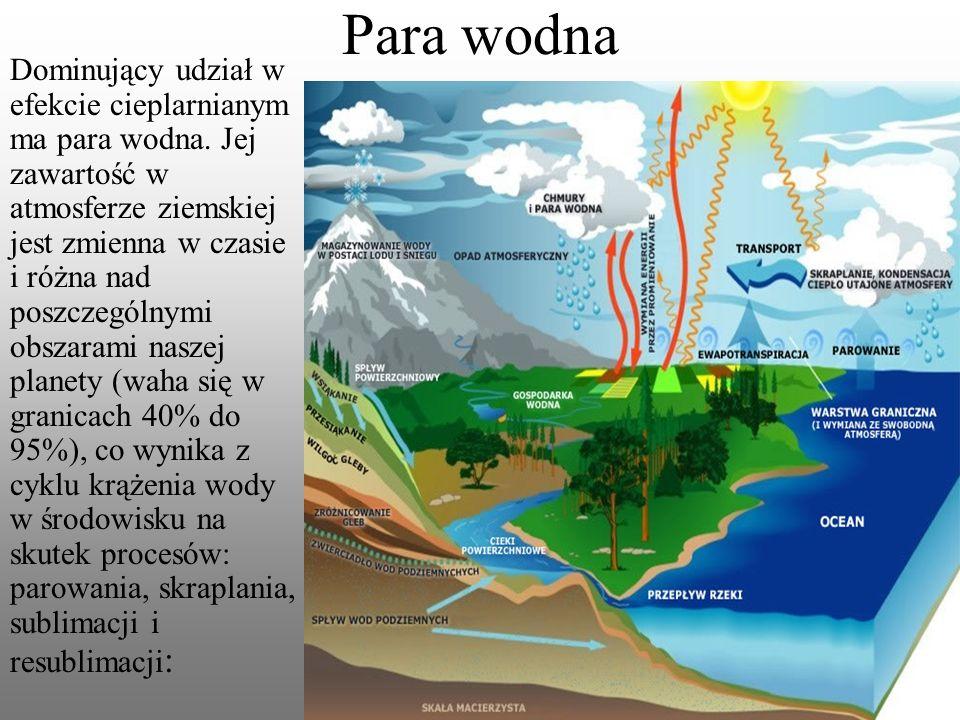 Dominujący udział w efekcie cieplarnianym ma para wodna.