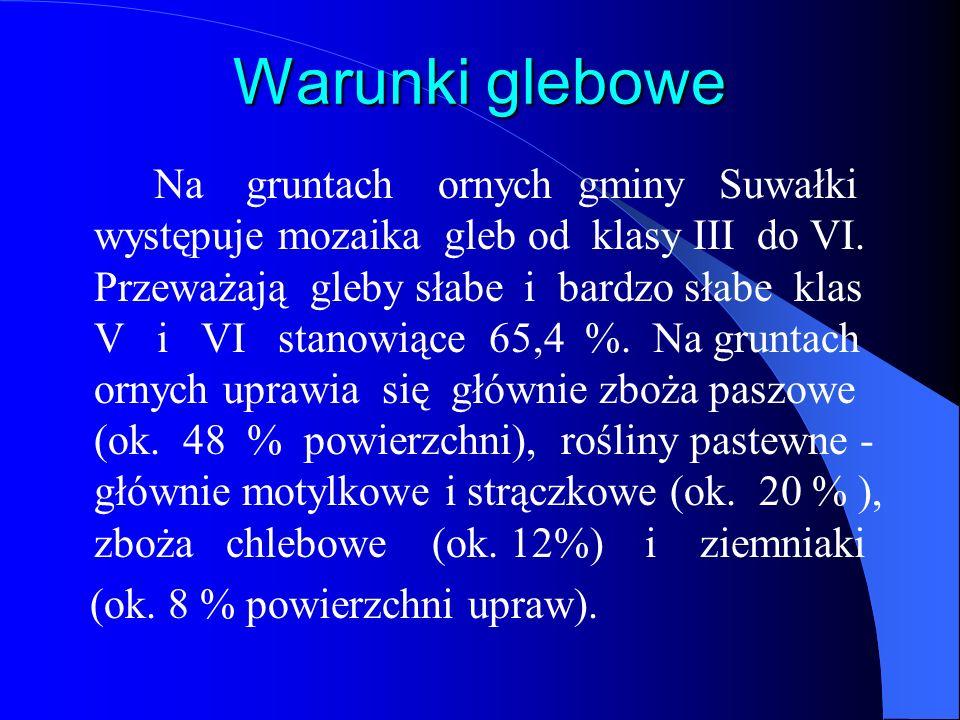 Warunki glebowe Na gruntach ornych gminy Suwałki występuje mozaika gleb od klasy III do VI. Przeważają gleby słabe i bardzo słabe klas V i VI stanowią