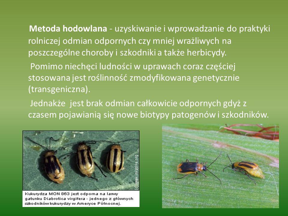 Metoda hodowlana - uzyskiwanie i wprowadzanie do praktyki rolniczej odmian odpornych czy mniej wrażliwych na poszczególne choroby i szkodniki a także