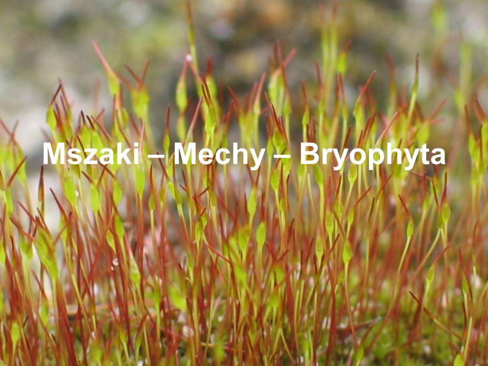 Mszaki - ogólnie Rozpowszechnione na całej kuli zemskiej Większością lądowe, wilogocio- i cieniolubne.