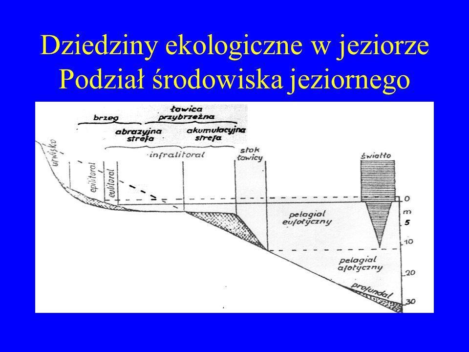 Podział jezior kryterium: pochodzenie Tektoniczne Polodowcowe Wulkaniczne Krasowe Rzeczne Przybrzeżne