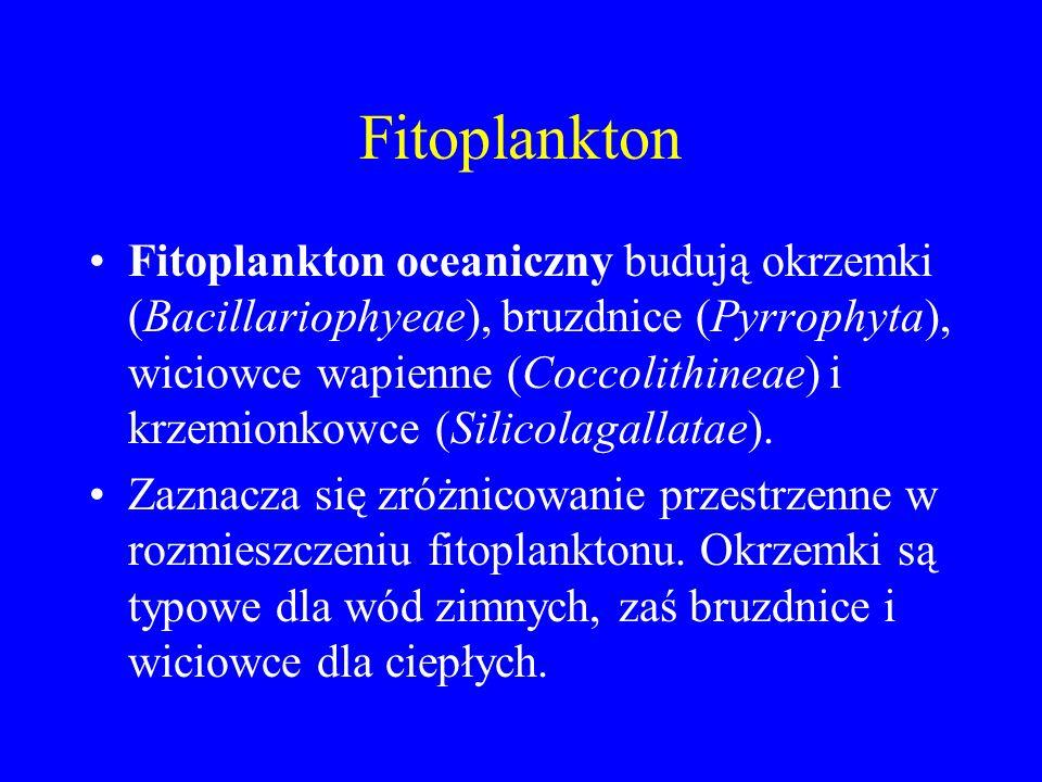 Fitoplankton Fitoplankton oceaniczny budują okrzemki (Bacillariophyeae), bruzdnice (Pyrrophyta), wiciowce wapienne (Coccolithineae) i krzemionkowce (Silicolagallatae).