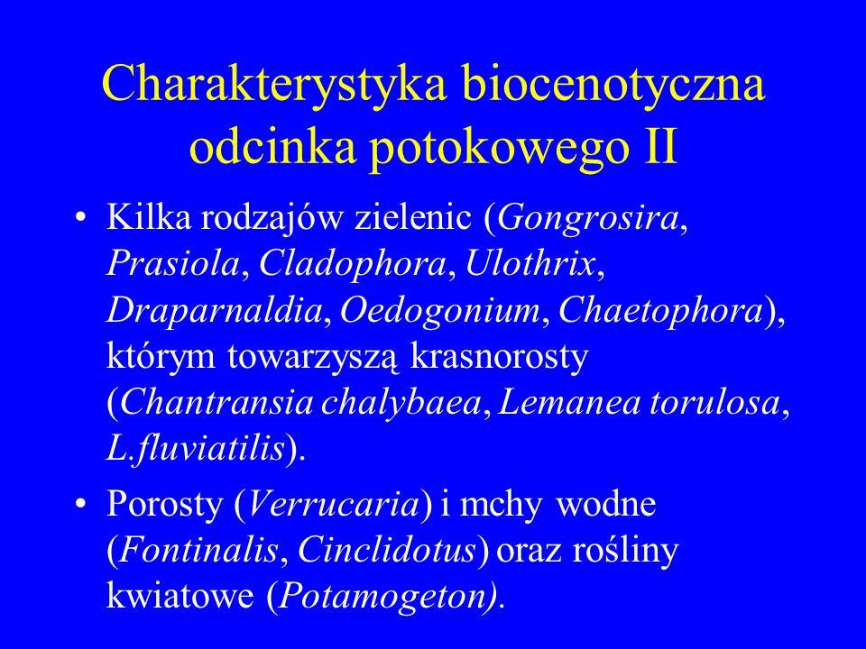 Charakterystyka biocenotyczna odcinka potokowego I Glony o płaskich, skorupiastych plechach, przylegających do twardego, skalistego dna: sinice (rząd