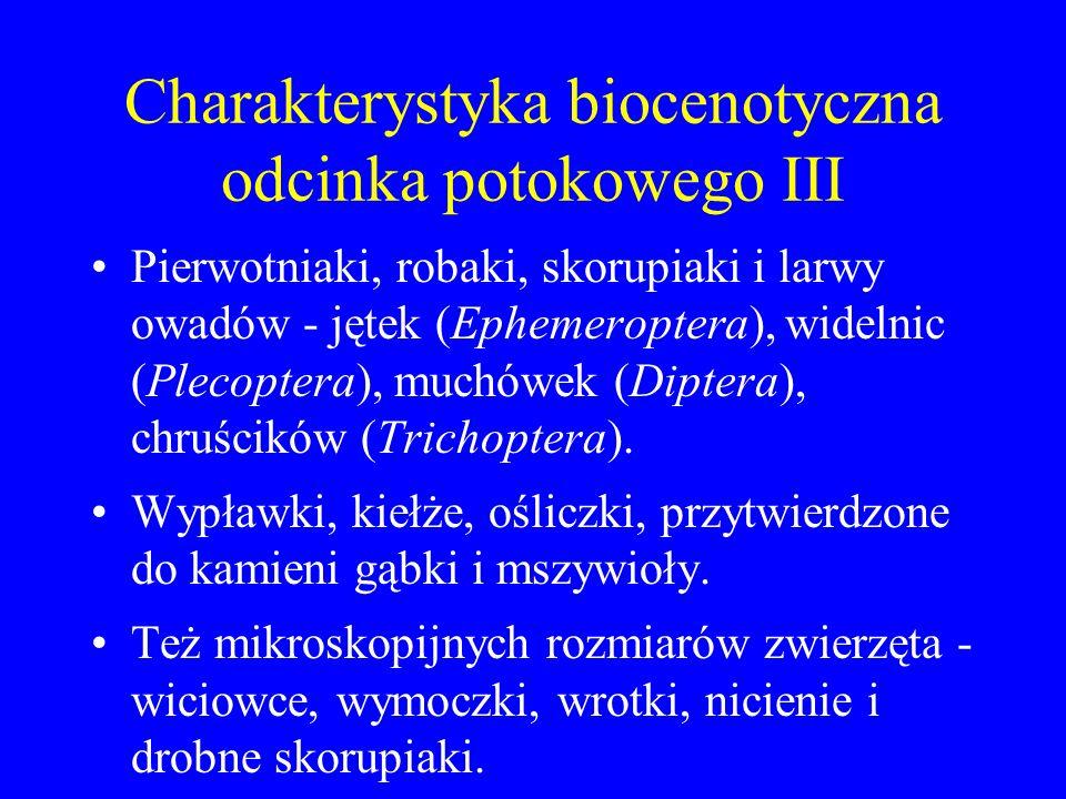 Charakterystyka biocenotyczna odcinka potokowego II Kilka rodzajów zielenic (Gongrosira, Prasiola, Cladophora, Ulothrix, Draparnaldia, Oedogonium, Cha