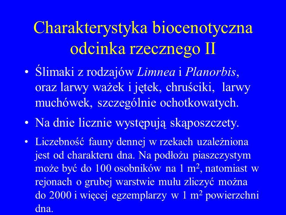 Charakterystyka biocenotyczna odcinka rzecznego I Odcinek rzeczny charakteryzuje się liczną obecnością dobrze rozwiniętych zbiorowisk roślin kwiatowyc
