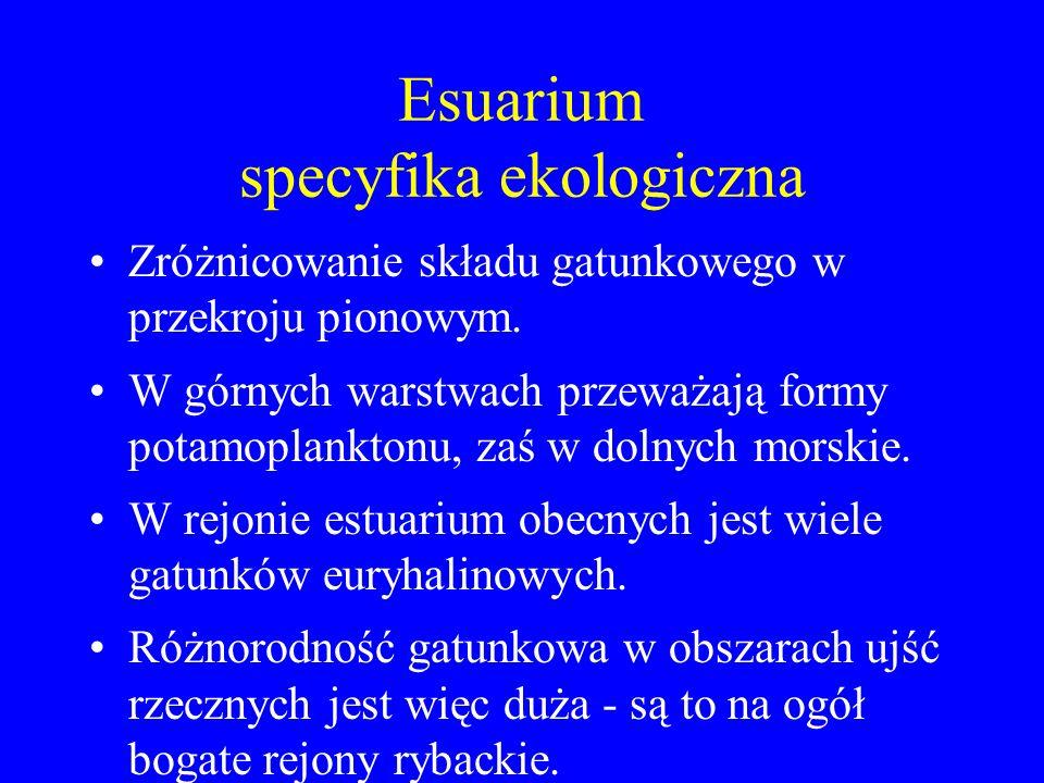 Estuarium specyfika środowiskowa Ekoton (czyli środowisko stykowe), gdzie bytują obok siebie gatunki typowe dla dwóch różnych ekosystemów - w warstwie