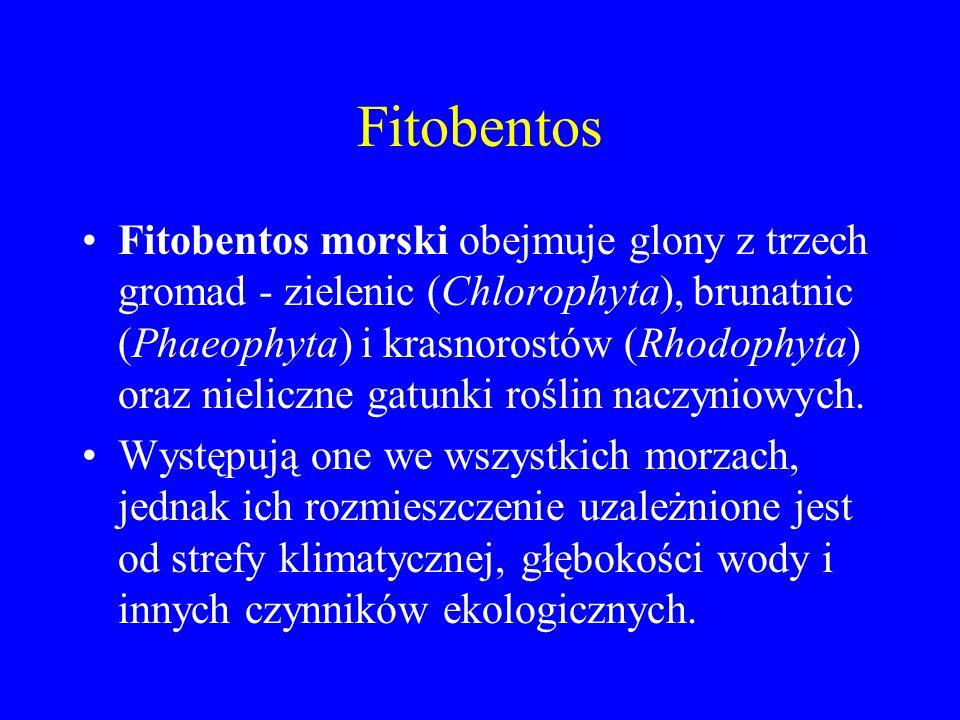 Fitobentos Fitobentos morski obejmuje glony z trzech gromad - zielenic (Chlorophyta), brunatnic (Phaeophyta) i krasnorostów (Rhodophyta) oraz nieliczne gatunki roślin naczyniowych.