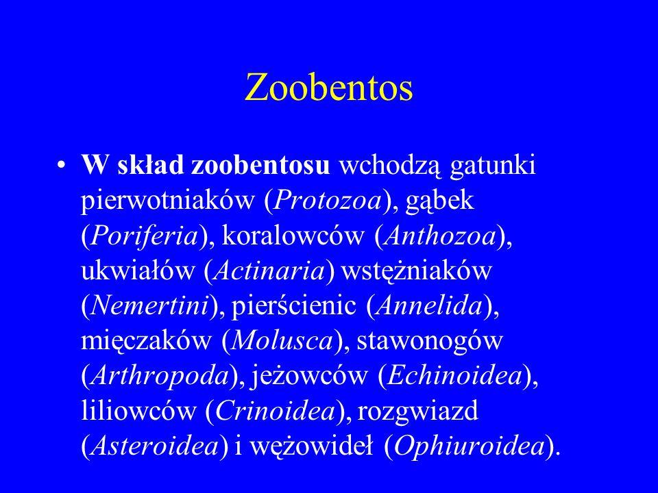 Zoobentos W skład zoobentosu wchodzą gatunki pierwotniaków (Protozoa), gąbek (Poriferia), koralowców (Anthozoa), ukwiałów (Actinaria) wstężniaków (Nemertini), pierścienic (Annelida), mięczaków (Molusca), stawonogów (Arthropoda), jeżowców (Echinoidea), liliowców (Crinoidea), rozgwiazd (Asteroidea) i wężowideł (Ophiuroidea).
