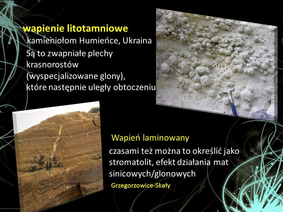 wapienie litotamniowe kamieniołom Humieńce, Ukraina Są to zwapniałe plechy krasnorostów (wyspecjalizowane glony), które następnie uległy obtoczeniu cz