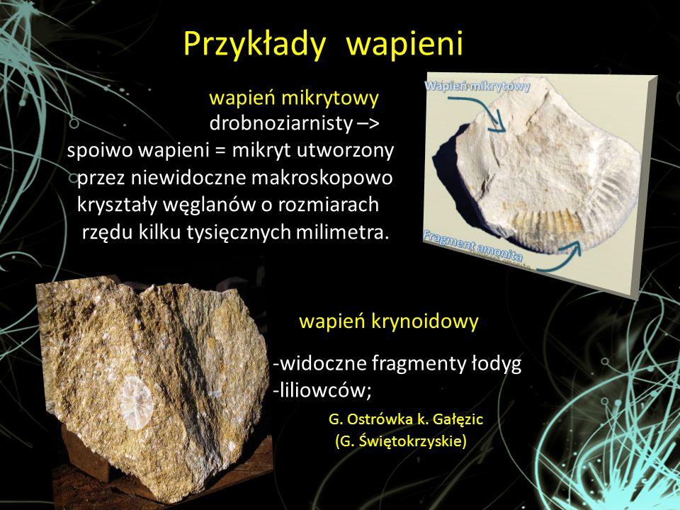 Przykłady wapieni : wapień mikrytowy wapień krynoidowy drobnoziarnisty –> spoiwo wapieni = mikryt utworzony przez niewidoczne makroskopowo kryształy w