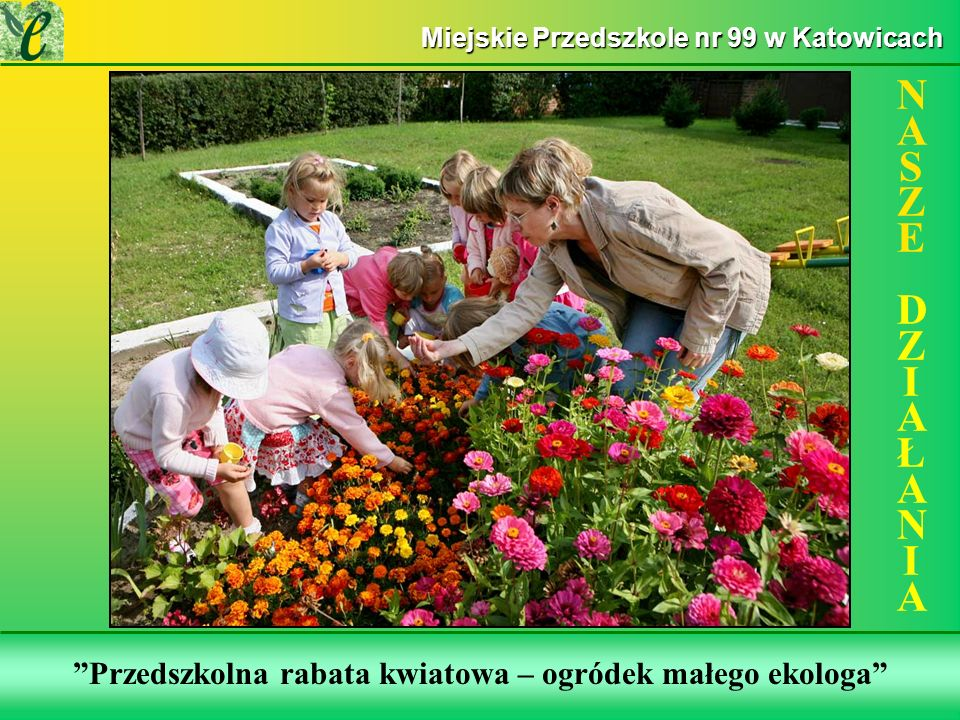 Wybrane działania w ramach zdobywania Zielonego Certyfikatu Przedszkolna rabata kwiatowa – ogródek małego ekologa NASZE DZIAŁANIANASZE DZIAŁANIA Miejskie Przedszkole nr 99 w Katowicach