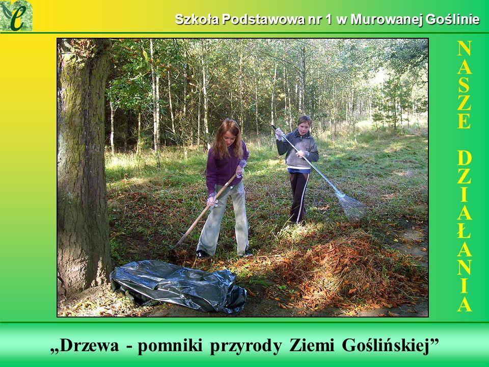 Wybrane działania w ramach zdobywania Zielonego Certyfikatu Drzewa - pomniki przyrody Ziemi Goślińskiej NASZE DZIAŁANIANASZE DZIAŁANIA Szkoła Podstawo