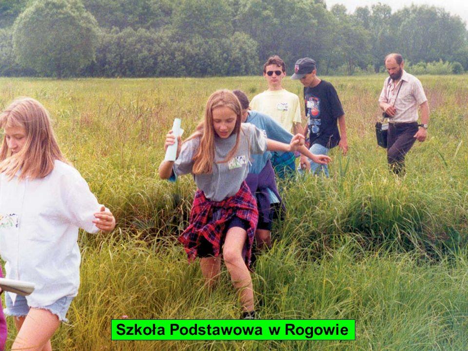 Szkoła Podstawowa w Rogowie
