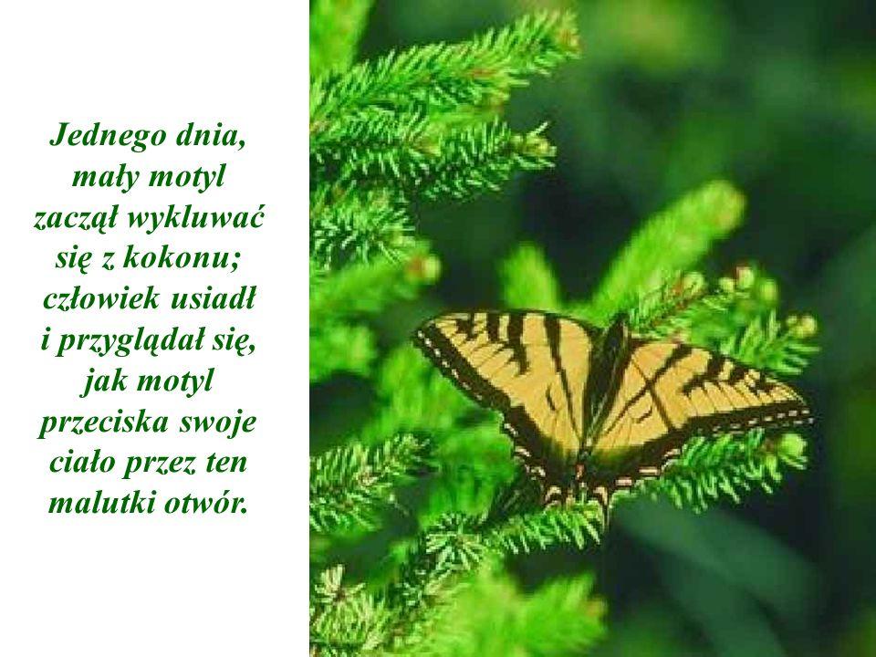 I wtedy motyl jakby się zatrzymał. Tak jakby zaszedł tak daleko, jak mógł i dalej już nie miał sił.