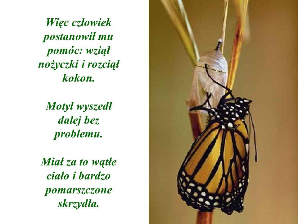 Człowiek kontynuował obserwacje, ponieważ spodziewał się, że w każdej chwili skrzydła motyle zaczną grubieć, powiększać się, dzięki czemu motyl będzie mógł odlecieć i zacząć żyć.
