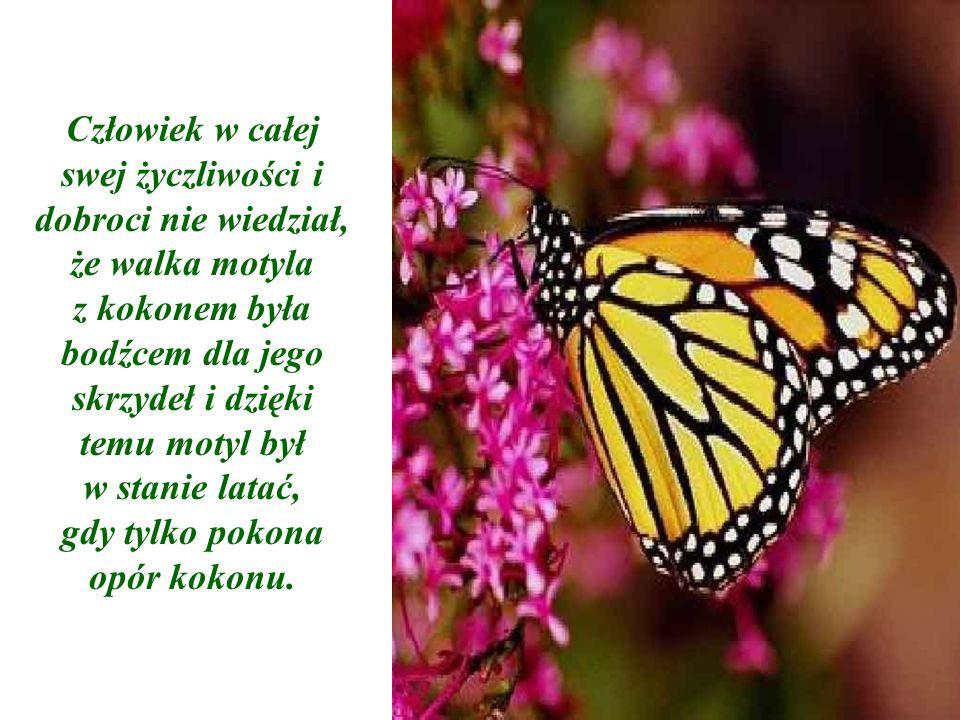 Człowiek w całej swej życzliwości i dobroci nie wiedział, że walka motyla z kokonem była bodźcem dla jego skrzydeł i dzięki temu motyl był w stanie la